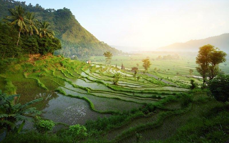 میدانید بالی کجاست؟