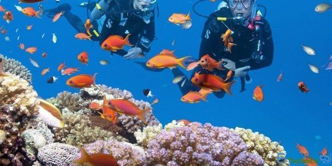 در زیر آب های تایلند چه می گذرد
