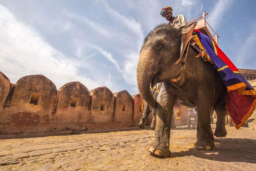 تایلند به جمع کشورهای گردشگری مدافع حقوق فیل پیوست