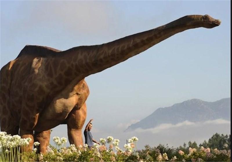 تصاویر کشف تخم دایناسور در چین