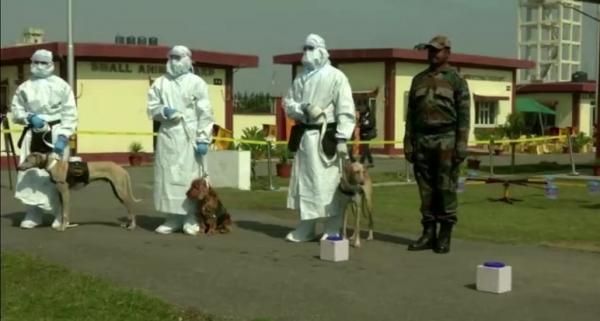 استفاده از سگ های نظامی هند برای شناسایی کرونا